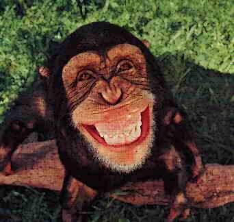 Monyet pun tertawa
